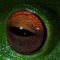 Eye Of The Frog by Bruce J Robinson