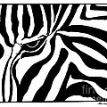 Eye Of The Zebra by Billinda Brandli DeVillez