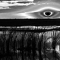 Eye Over Everglades by David Lee Thompson