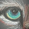 eye by Sharon Tuff