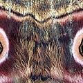 Eyes by Chris Minihane