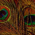 Eyes by Corrie Zacharias