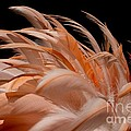 Fabulous Flamingo Feathers by Sabrina L Ryan