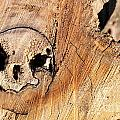 Face In The Wood by David Arment