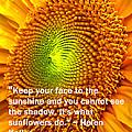 Face To The Sun by Ian  MacDonald