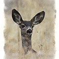 Faded Fawn by Steve McKinzie