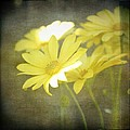 Faded Yellow by Cathie Tyler