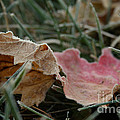 Fading Summer by Susan Herber