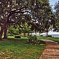 Fairhope Lower Park 2 by Michael Thomas
