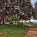 Fairhope Lower Park 5 by Michael Thomas