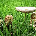 Fairy Garden by Ronel Broderick