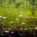 Fairy Meadow by Ellen Heaverlo