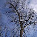 Fairy Tale Tree by Corinne Elizabeth Cowherd