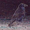 Faithful Raven by Eric Tressler