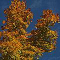 Fall 23 by Jim Lorriman