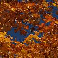 Fall 25 by Jim Lorriman