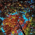 Fall Arrives ... by Juergen Weiss