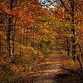 Fall At Center Point Trailhead by Michael Dougherty