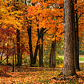 Fall At Home by Coby Cooper