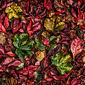 Fall Autumn Leaves by John Farnan
