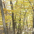 Fall Beginning  by Yumi Johnson