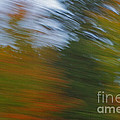 Fall Blur by Elaine Mikkelstrup