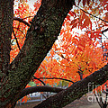 Fall Branches by Leslie Kinney