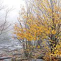 Fall Color And Fog by Thomas R Fletcher