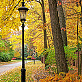 Fall Color And Lamppost by Jack Schultz
