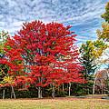 Fall Color - Blackwater by Harold Rau