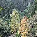 Fall Color In The Trees by Linda Hutchins