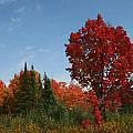 Fall Color by Joi Electa