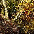 Fall Color Wall Art Landscape by Carol F Austin