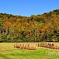 Fall Color Randolph County West Virginia by Thomas R Fletcher
