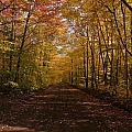 Fall Color Road by Mark A Dolan