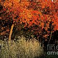 Fall Colors 2 by Vilas Malankar