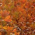 Fall Colors by Douglas Barnard