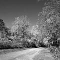 Fall Colors In Black And White by Janice Adomeit