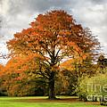 Fall Colors by Joerg Lingnau
