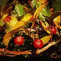 Fall Colors by Milena Ilieva