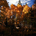 Fall Colors Taylor Creek. by Mitch Shindelbower
