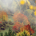 Fall Colours by Ayhan Altun