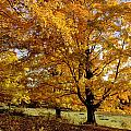 Fall Colours In Eastern Townships by David Chapman
