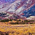 Fall Colours In Ogilvie Mountains by Yves Marcoux