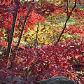 Fall Comes To New England by Michelle Welles