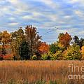 Fall by Darren Fisher