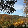 Fall Delight 9 by Janet Dickinson