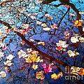 Fall by Eena Bo