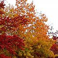 Fall Filled Sky by Holly Blunkall