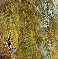 Fall Fisherman by Elaine Mikkelstrup